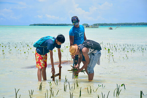 image_2 Restoration of a mangrove forest to limit erosion in Tuvalu